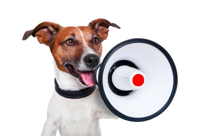 Hund mit Megaphone